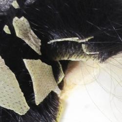 劣化しヒビ割れた人工皮膚