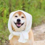 かつらWith「アツコエ」大賞|結果発表!